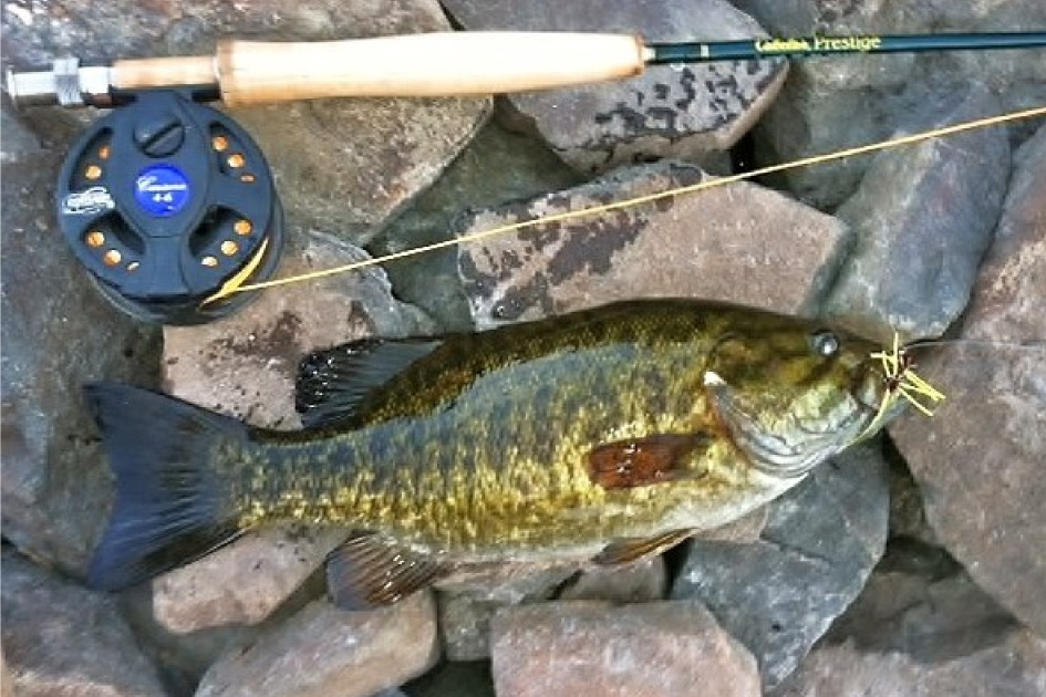 Snake River Fly Fishing for Bass