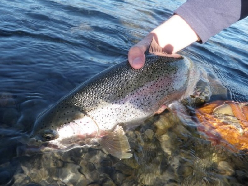 Idaho salmon or snake river wilderness fly fishing bass for Bass fishing idaho