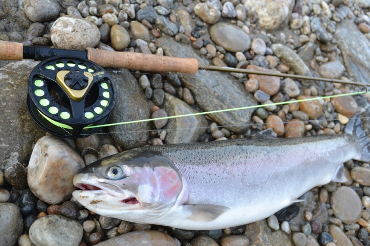 salmon river fly fishing trips
